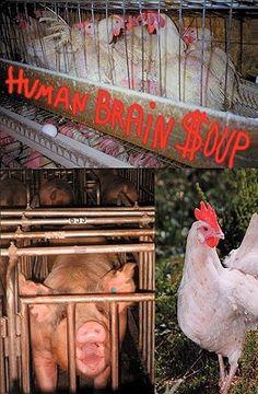 portada human brain soup