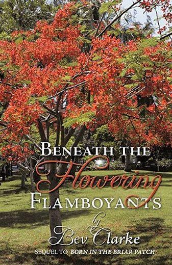 beneath the flowering flamboyants
